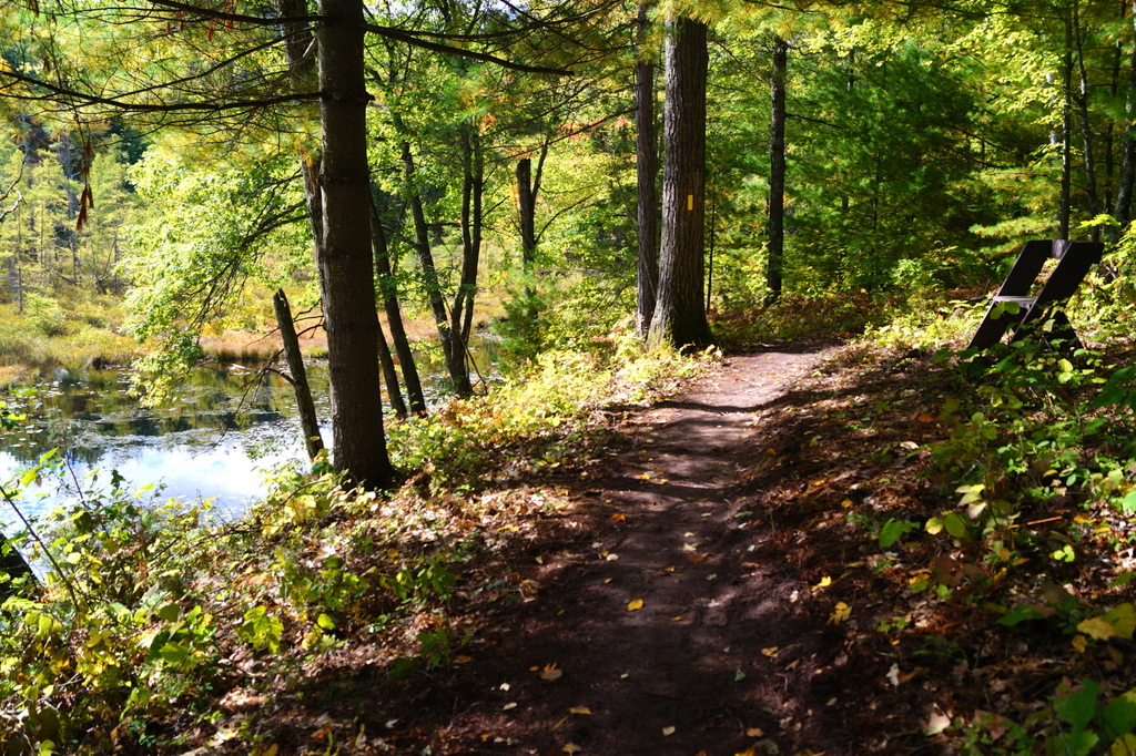 The Ice Age Trail, Harwood Lakes segment, in Chippewa Country.  Photo by David Caliebe, used with permission.