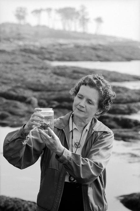 Rachel Carson examining a specimen during her time as a marine biologist.