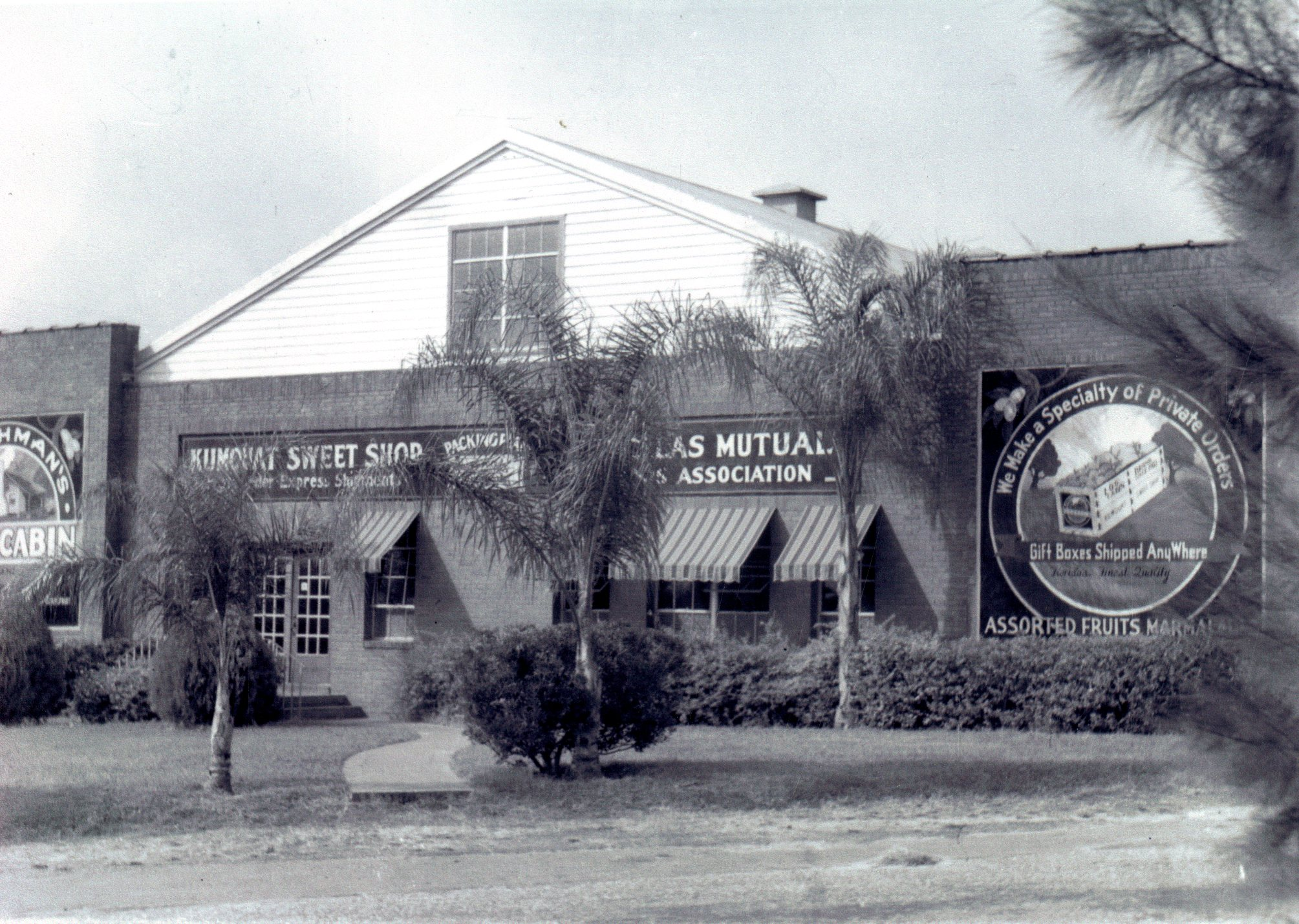 First Coachman citrus packing house, Clearwater, Florida, pre-1950.