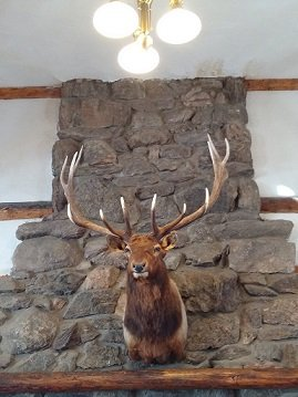 Sampson was a resident bull elk who had lived on the YMCA grounds for many years.
