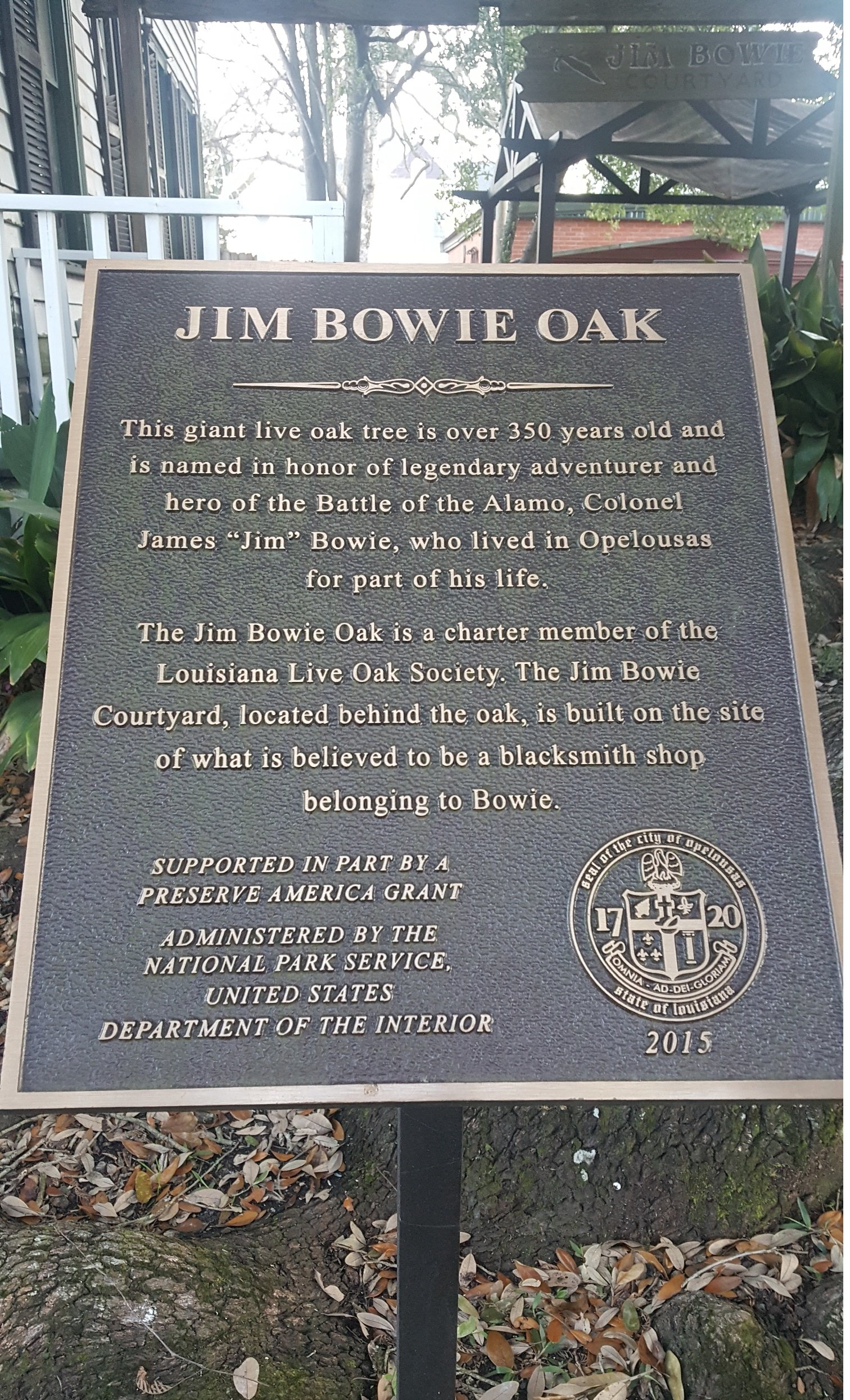 Plaque placed at the base of the tree.