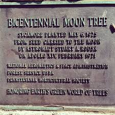 The first Bicentennial Moon Tree at Washington Square Park Historical Marker.