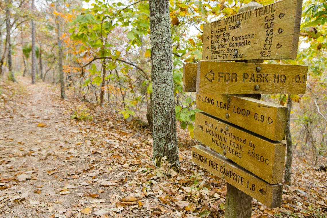 Natural landscape, Wood, Vegetation, Biome