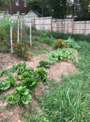The community garden.