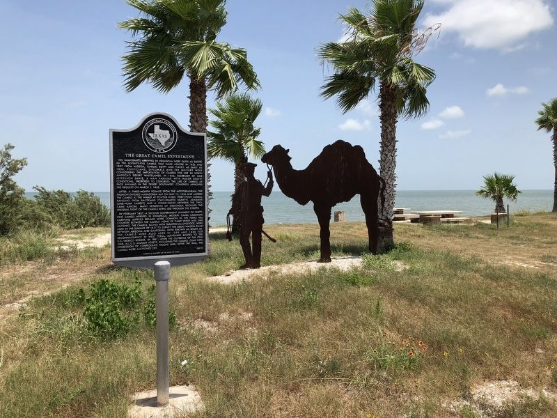 The Great Camel Experiment Marker. Photo by Brian Anderson, July 21, 2018. The Camel Experiment monument is displayed in Indianola, Texas, and in addition to a permanent tablet.