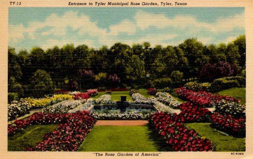 "This is an old postcard from Tyler titled ""The Rose Garden of America."" This garden is one of the many locations that the Festival uses during the Texas Rose Festival."