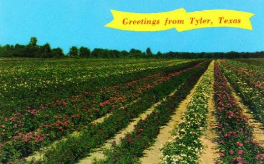 Here is another postcard from Tyler depicting what the Rose fields used to look like back in the late 1800s.