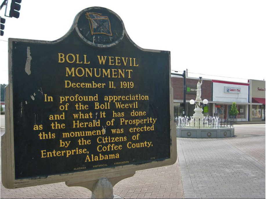 This is the plaque that stands nearby commemorating the boll weevil's ability to make farmers diversify their crops.