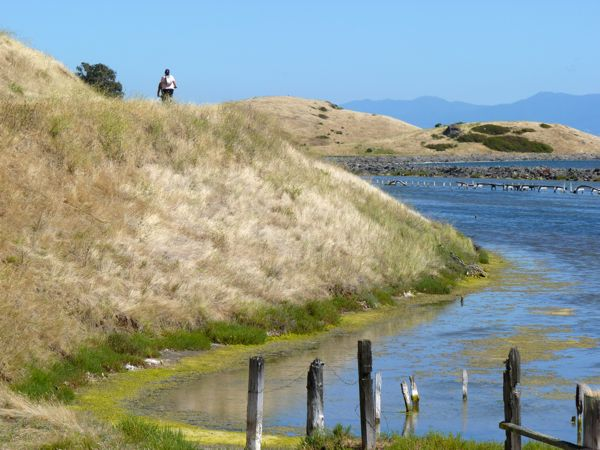 A typical coastal landscape from Coyote Hills.