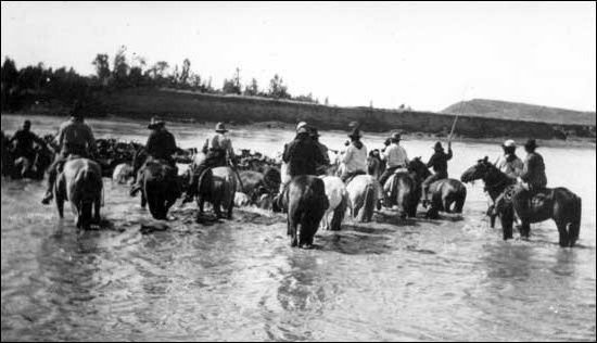 Here, Cowboys are crossing their cattle over a shallow river. The spontaneous rivers produced water and green grass for the cattle and a place to wash up find some relaxation for the Cowboys.