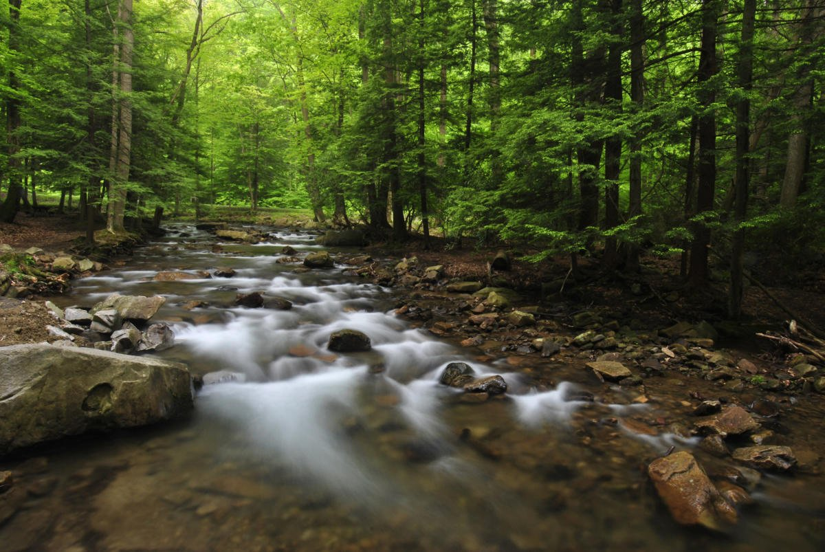 Here is one of the many streams at Linn Run State Park. It is not deep, as it runs over rocks. However, it is a beautiful attraction. (Image from tripadvisor.com)