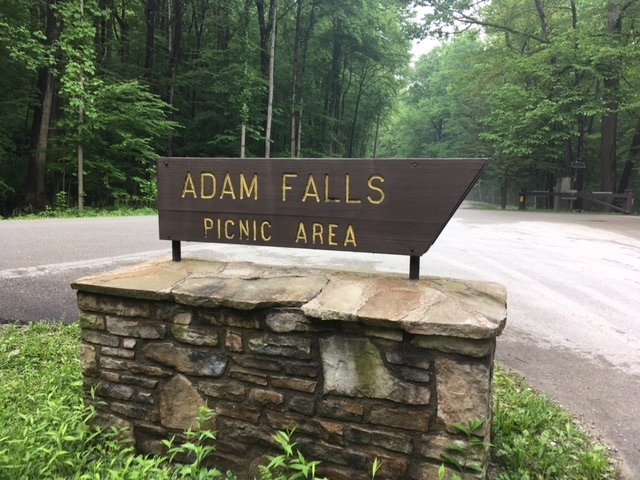 Many picnic areas are offered along the trails and throughout the park. This is a picture of the Adam Falls Picnic Area.  (Image from tripadvisor.com)