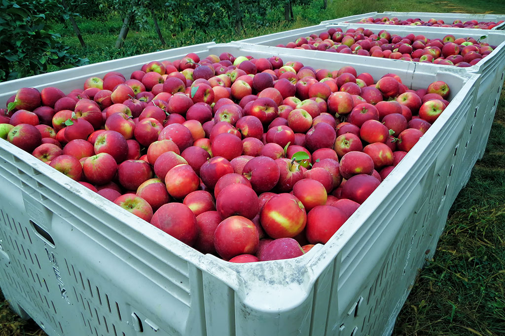 The farm was originally an apple orchard. (Photo courtesy of Bubba's Garage Blog)