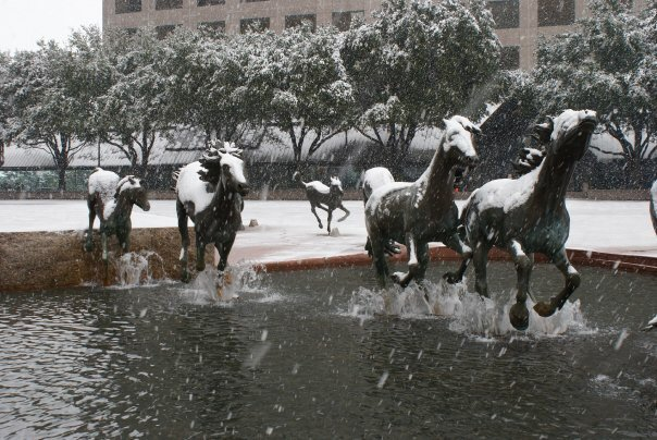 A picture of the mustangs in a rare North Texas snowstorm taken by local photographer, Tanya Mahoney. February 10th, 2010.