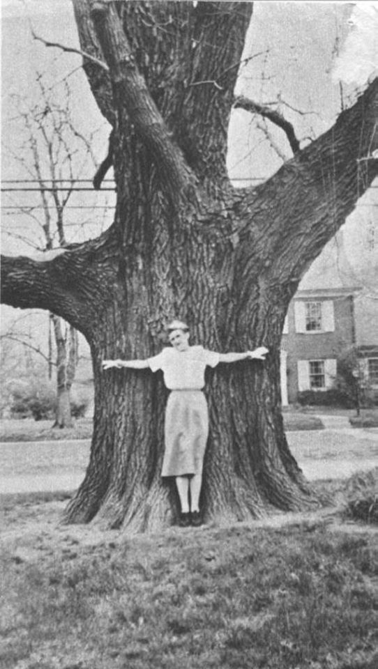 Grace Rash hugging the sassafras tree, date unknown