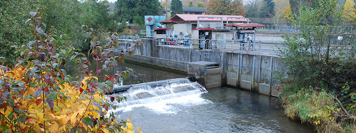 Issaquah Creek and hatchery facilities.