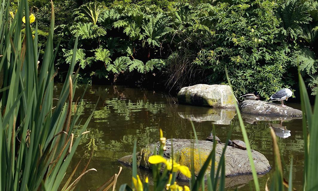 Waterfowl Pond, San Francisco Botanical Garden in Golden Gate Park