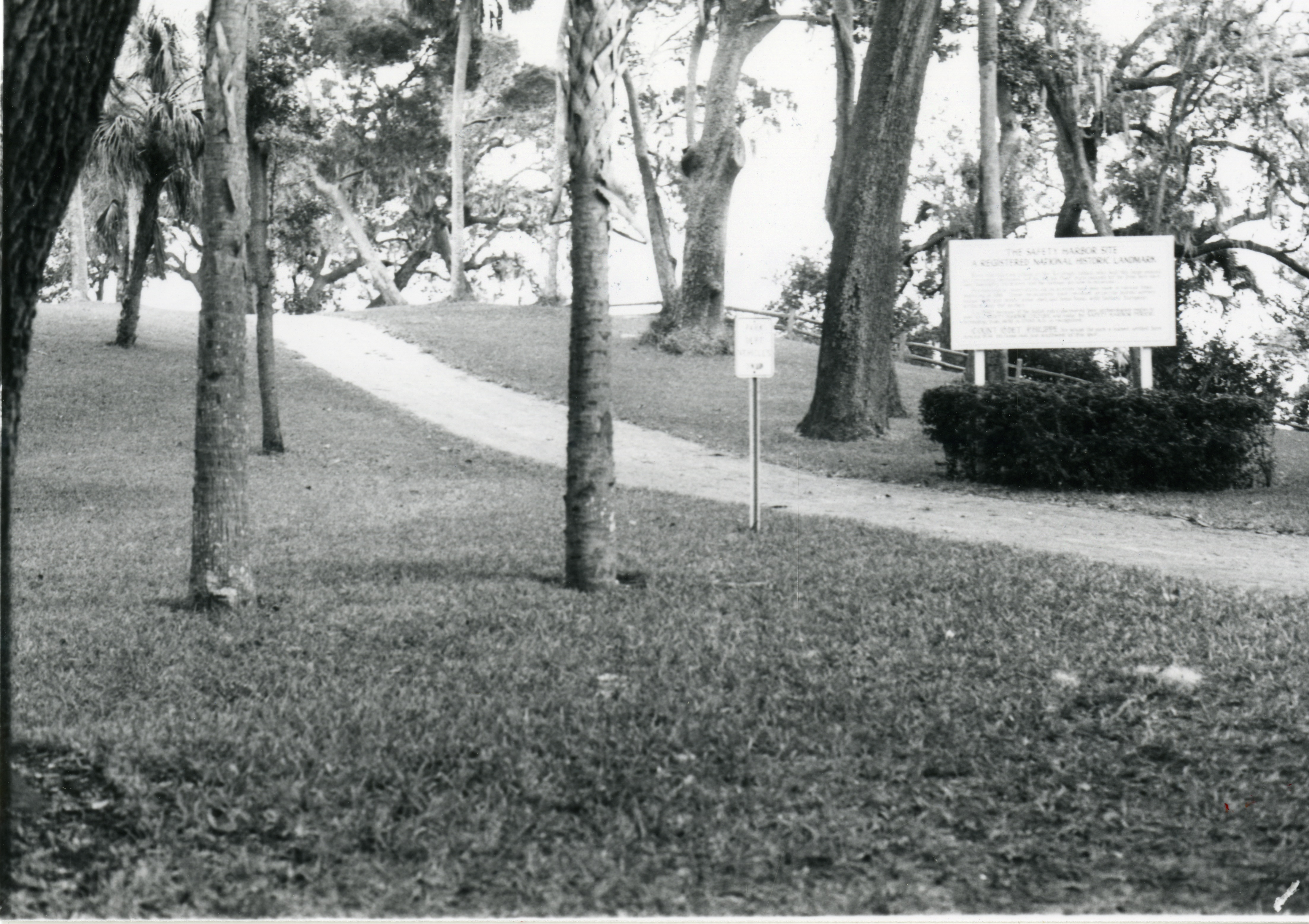 A trail at Philippe Park in Safety Harbor, Florida, undated. Wood for the Safety Harbor Church came from E.H. Coachman's sawmill, which was located on property that is now within Philippe Park.
