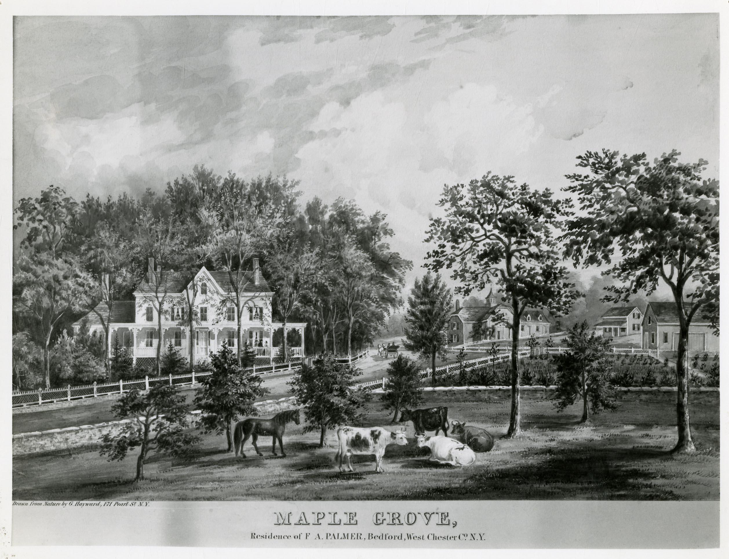 Maple Grove.