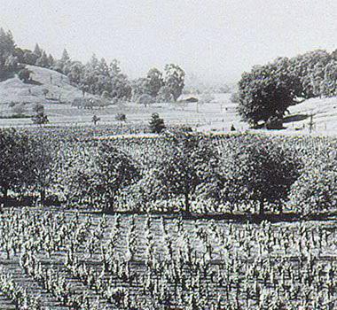 Beaulieu Vineyards, c. 1903