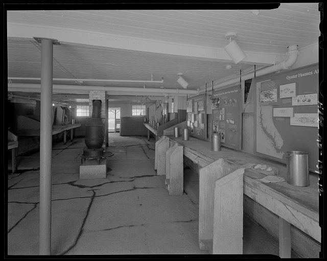 A 1968 photo of one of the shucking rooms.  Notice the shucking stands along the shucking table on the right.