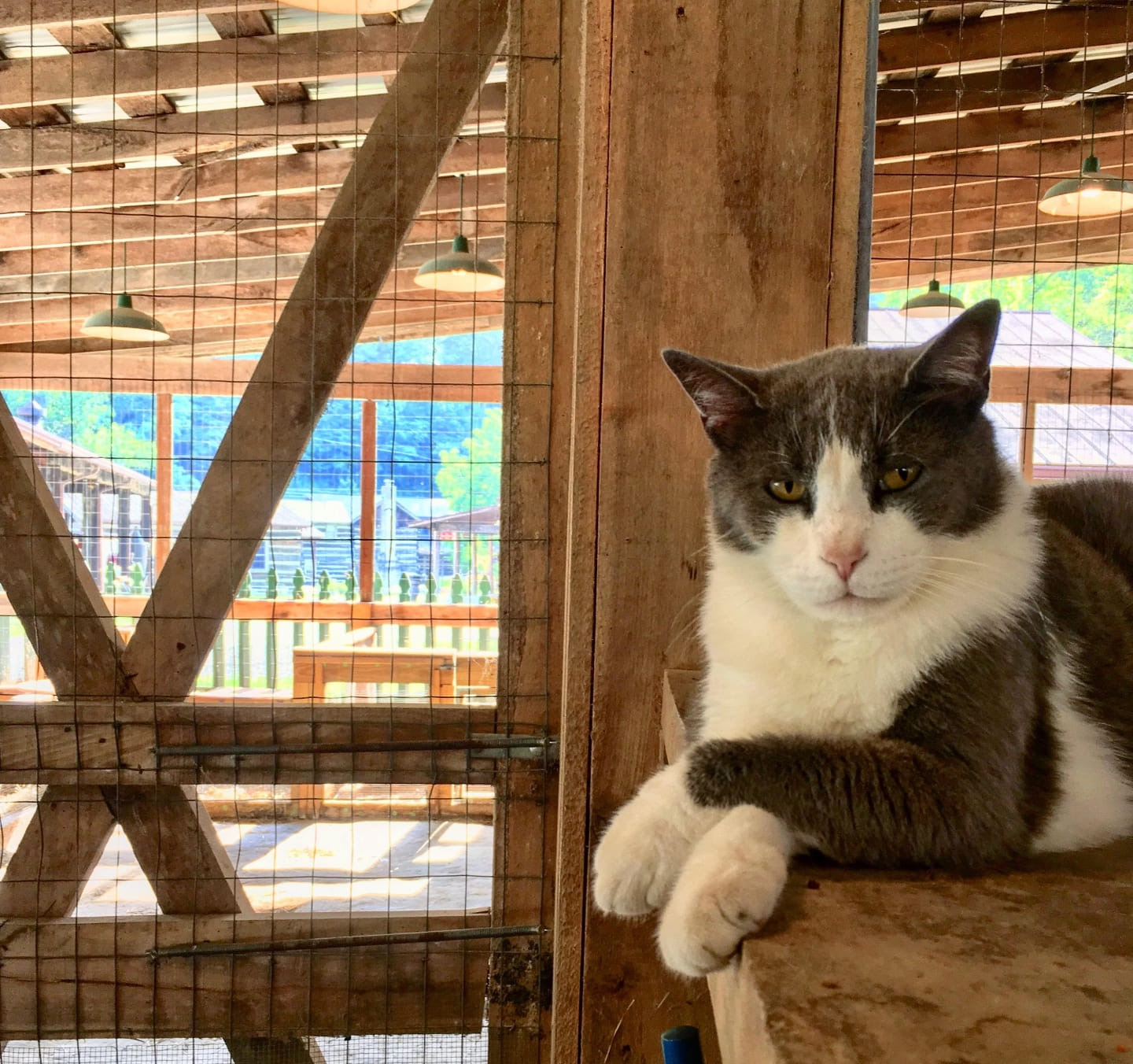 Charkey, one of the Petting Zoo's resident cats