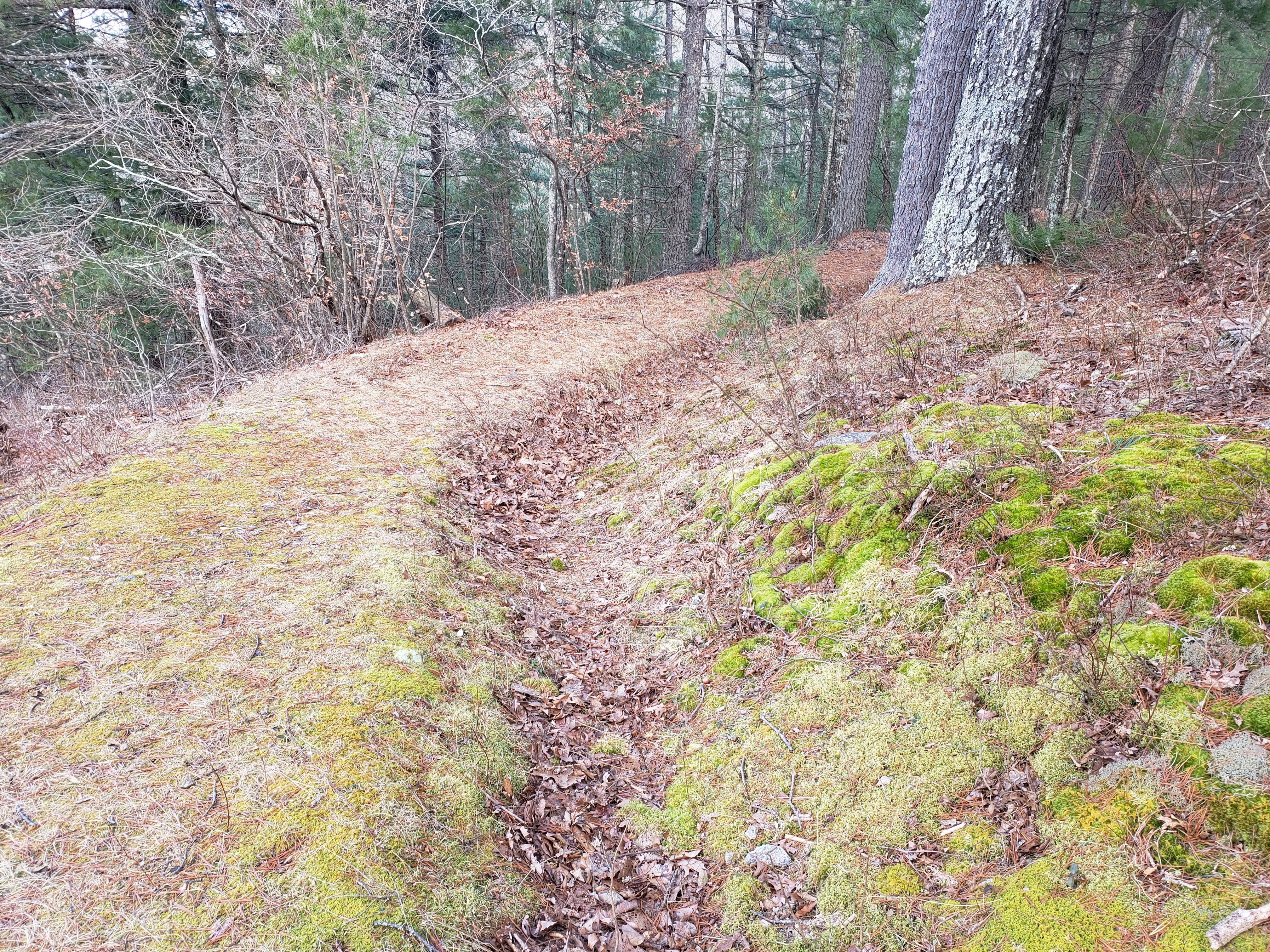 Remains of the trenches