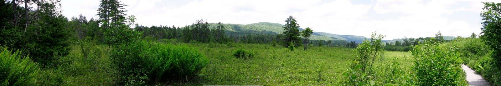 Open Bog Panorama