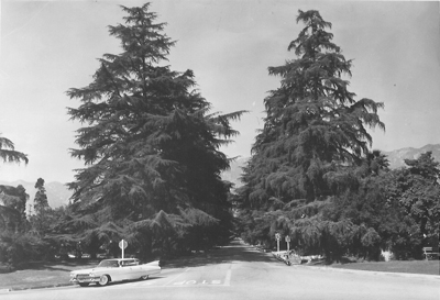 Trees in 1959