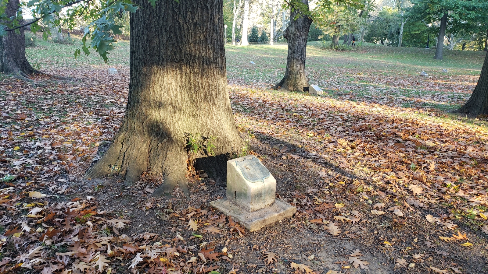 One of the remaining trees with a plaque