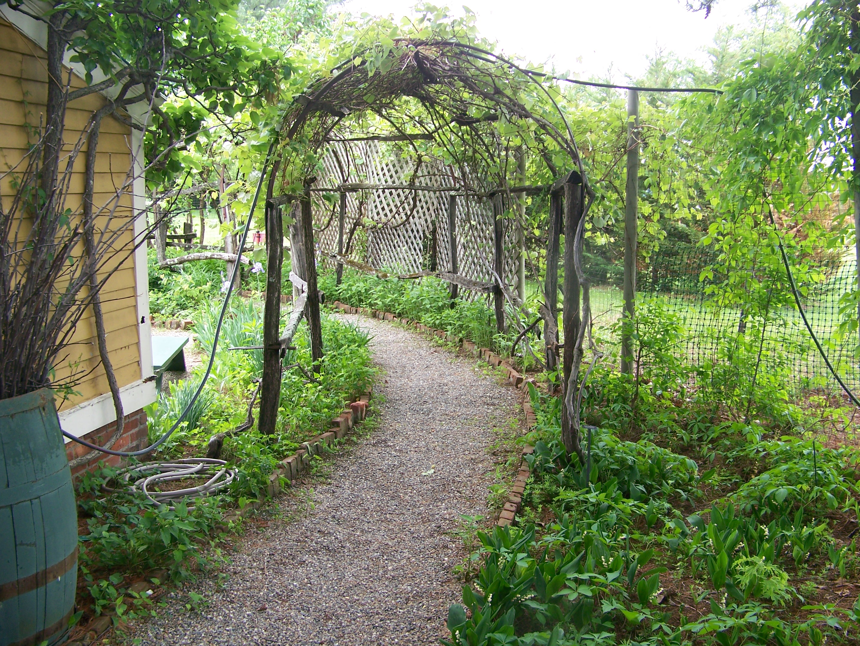 Grape Arbor in Herb Garden