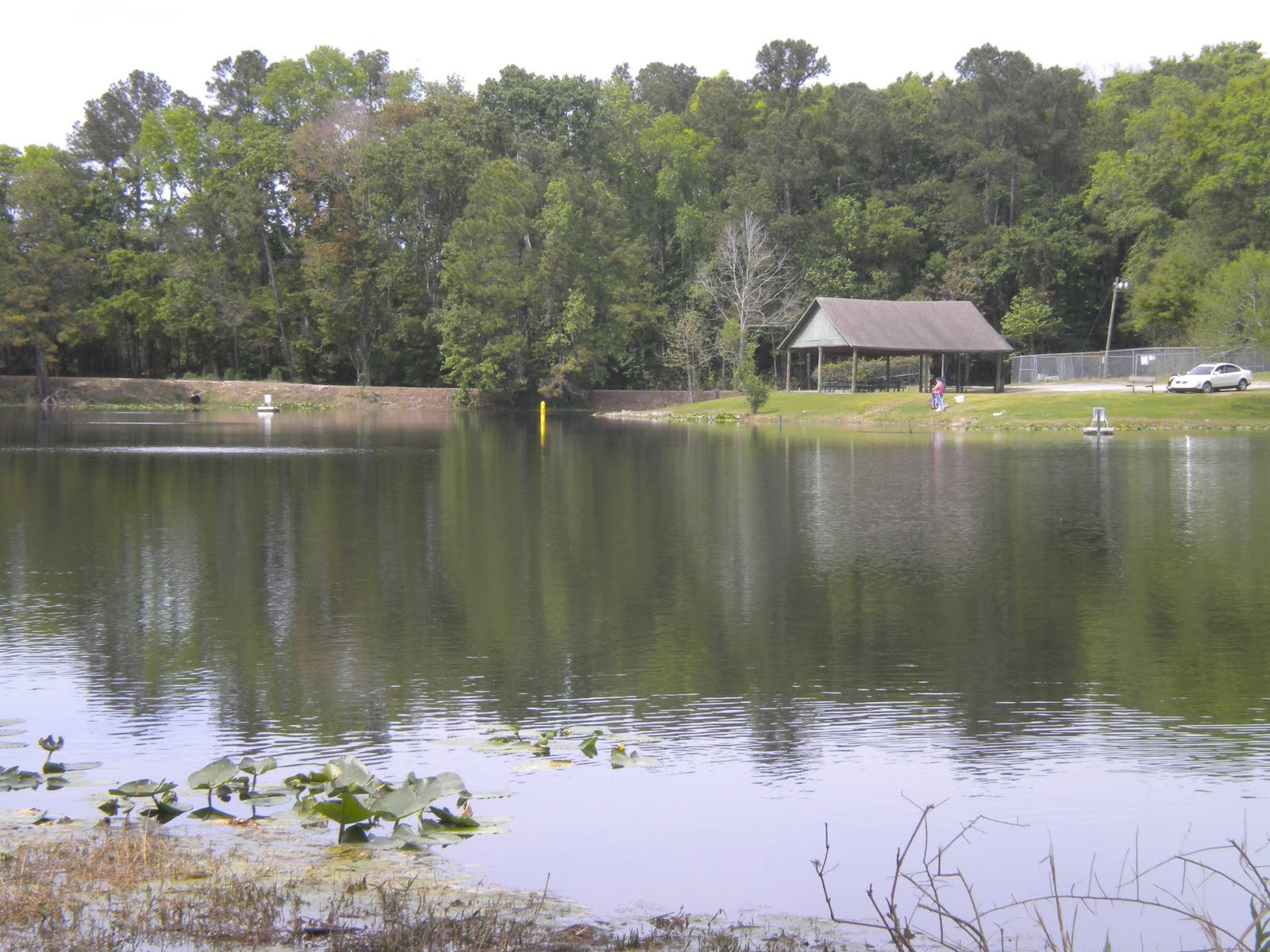 A lake at the park posted by a blogger