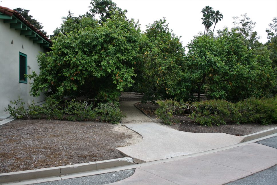 Orchard Pathway Entrance
