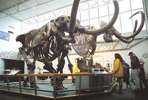 The Florida Museum of Natural History was founded in 1891 and is well regarded around the world for its collections and research.