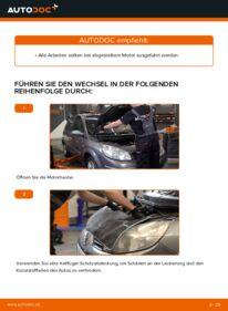 Wie der Wechsel durchführt wird: Keilrippenriemen Renault Scenic 2 1.9 dCi 1.5 dCi 1.6 tauschen