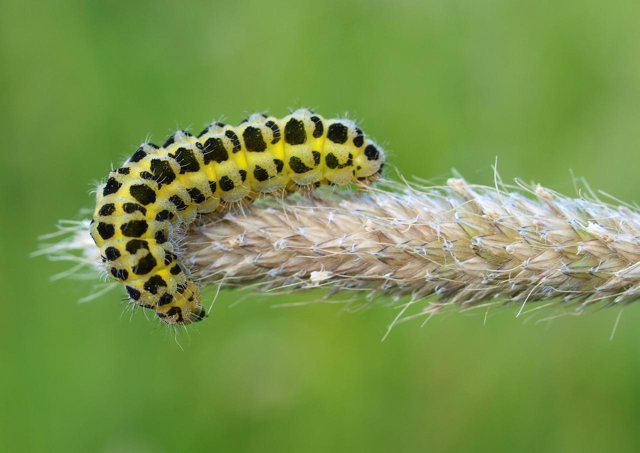 Grosses Fourmis Noires Dans Le Jardin prévenir les insectes - comment s'en débarrasser ? via capitale
