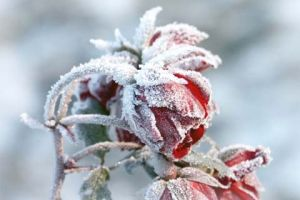 How to Protect Your Landscaping from Winter Weather