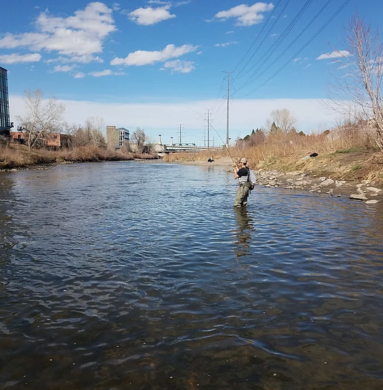 Fly Fishing Denver South Platte