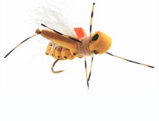 Hopper Promo AA - Thunder Thighs