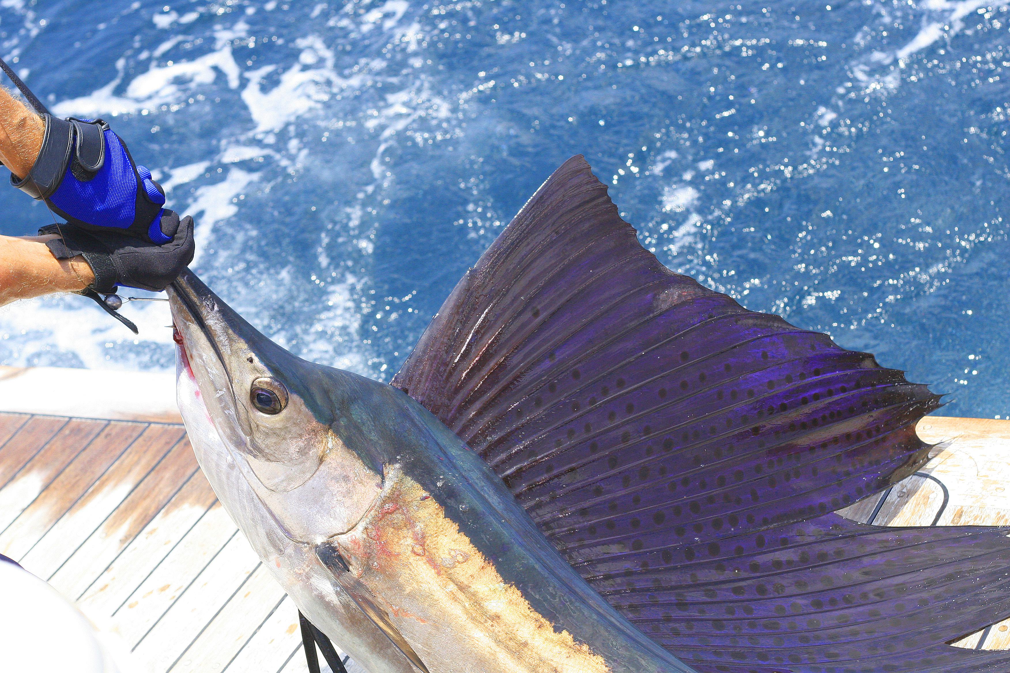 Inauguran el Torneo de Pesca Puntarena Sailfish Cup