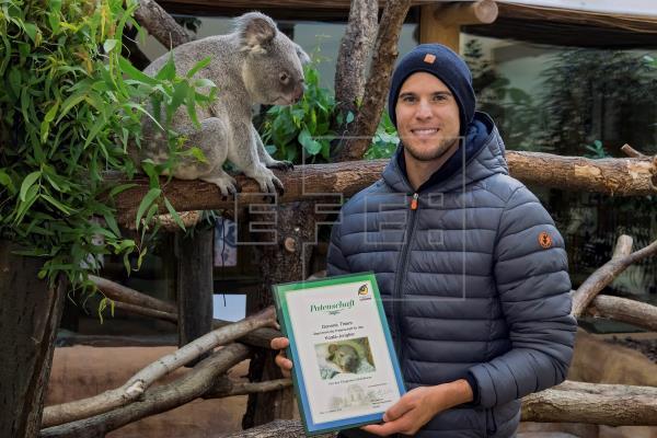 Tenista Thiem apadrina al primer koala nacido en el zoo de Viena