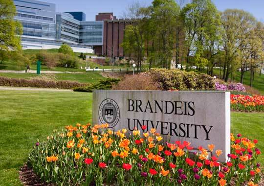 브랜다이스 대학교