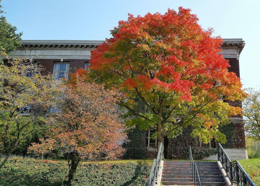 SUNY - 환경 과학 및 임업 대학