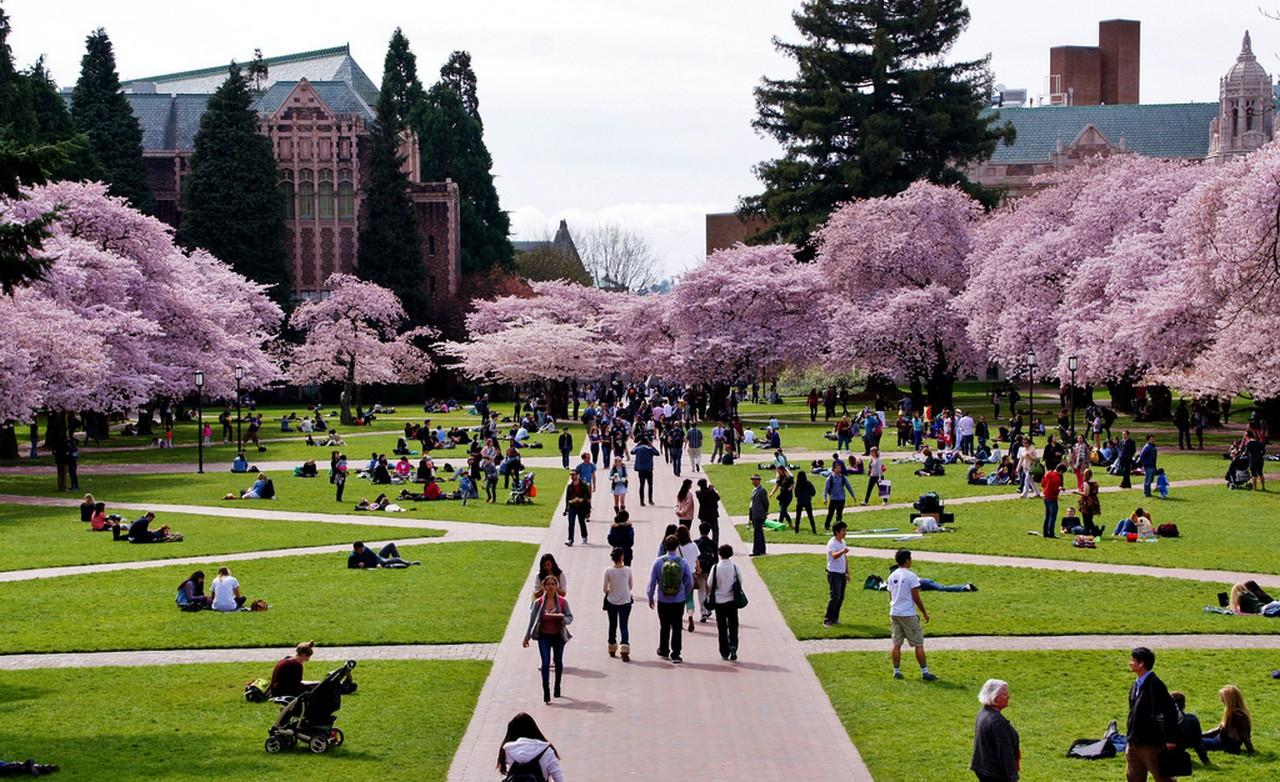 워싱턴 대학교