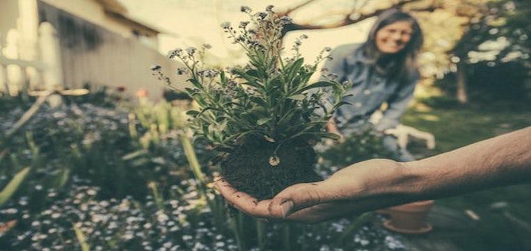 consejos mantenimiento jardines
