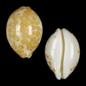 Annepona mariae
