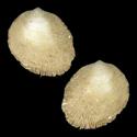 Limopsis aurita PERIO