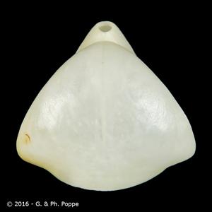 Dallina triangularis