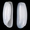 Adamnestia consobrinoides