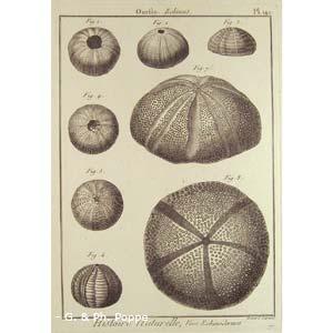 Encyclopédie méthodique, Bruguière, J.G., 1792. Plate 142. Ourfin, Echinus.
